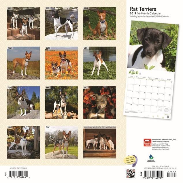 Rat Terriers Wall Calendar, Rat Terrier by Calendars