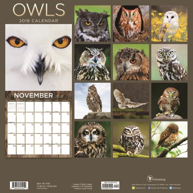 Owls Wall Calendar, Birds by Firefly Books Ltd