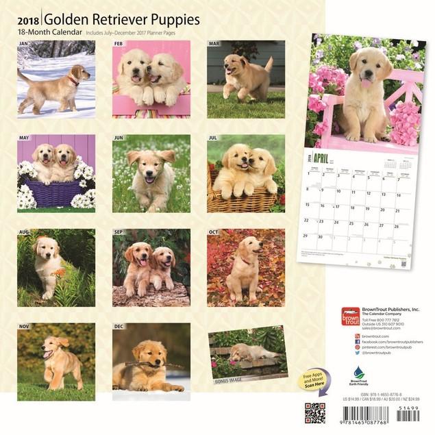 Golden Retriever Puppies Wall Calendar, Golden Retriever by Calendars