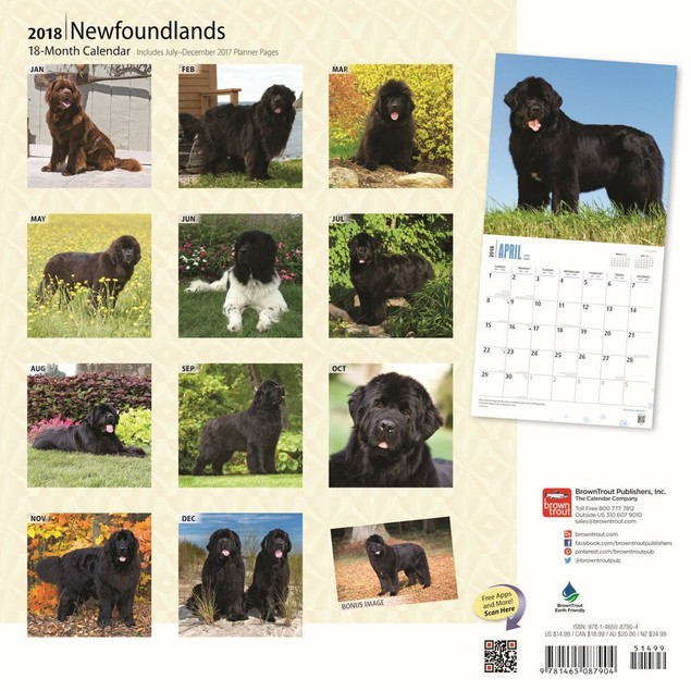 Newfoundlands Wall Calendar, Newfoundland by Calendars