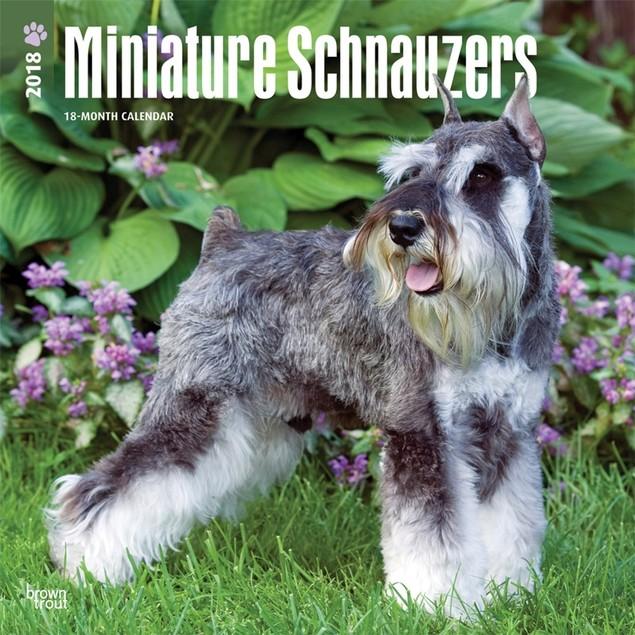 Schnauzers Miniature Wall Calendar