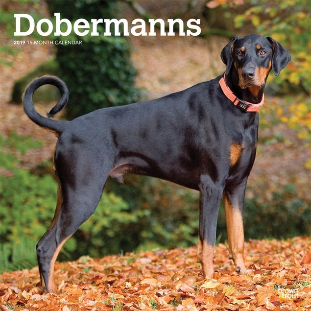 Dobermans Euro Wall Calendar, Doberman Pinscher by Calendars