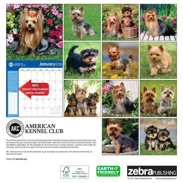 Yorkshire Terriers Wall Calendar, Yorkshire Terriers by Zebra Publishing