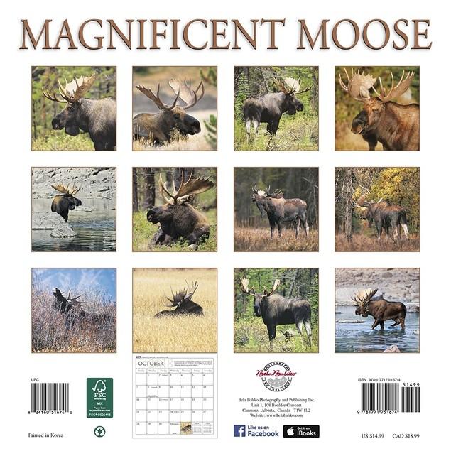 Magnificent Moose Wall Calendar, Deer by Bela Baliko Photography