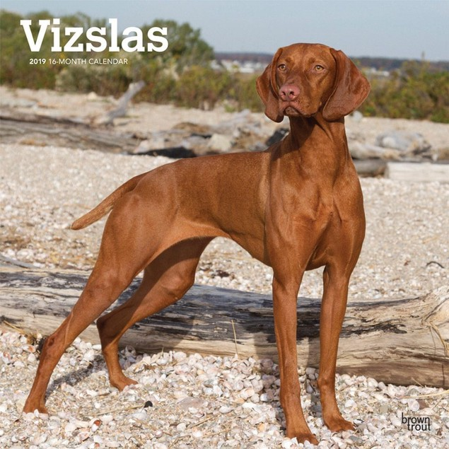 Vizlas Wall Calendar, More Dogs by Calendars