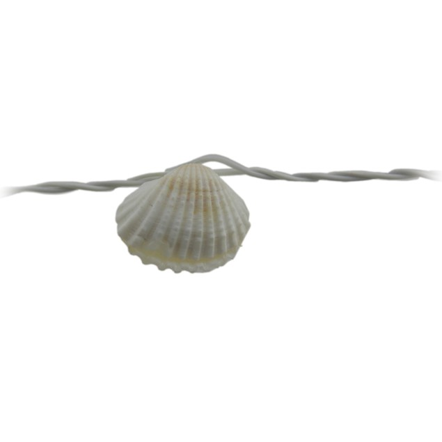 Sealites Real Seashell Led String Lights 6 Feet String Lights