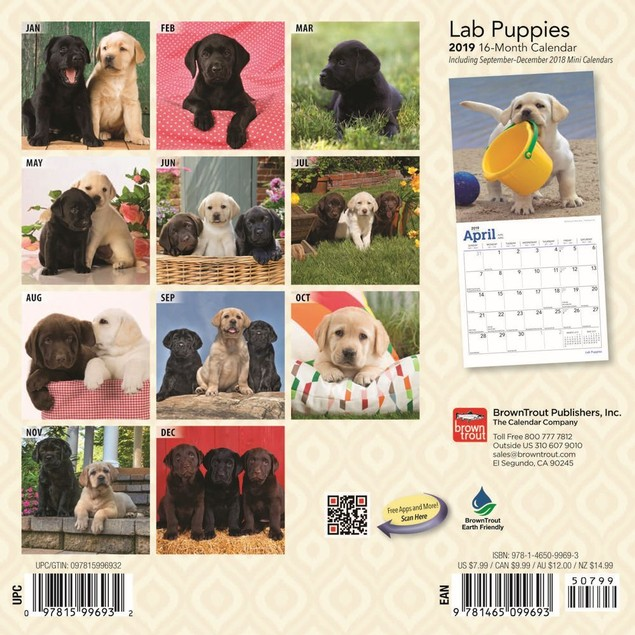 Lab Retriever Puppies Mini Wall Calendar, Labrador Retriever by Calendars