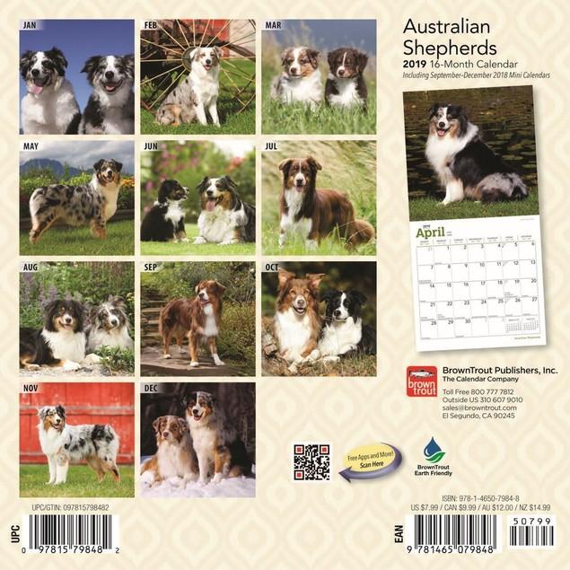 Australian Shepherd Mini Wall Calendar, Australian Shepherd by Calendars