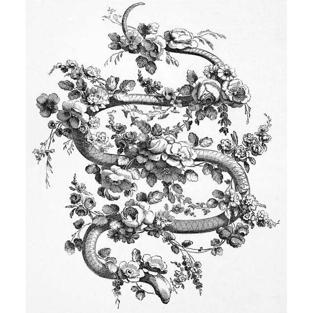 Snake And Roses, 1762. /Ndecorative Engraving, French, 1762. Poster