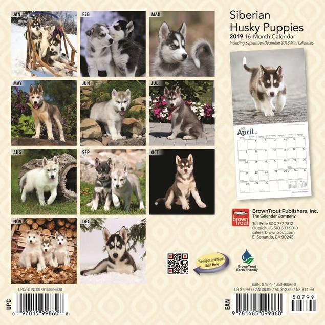 Siberian Husky Puppies Mini Wall Calendar, Siberian Husky by Calendars