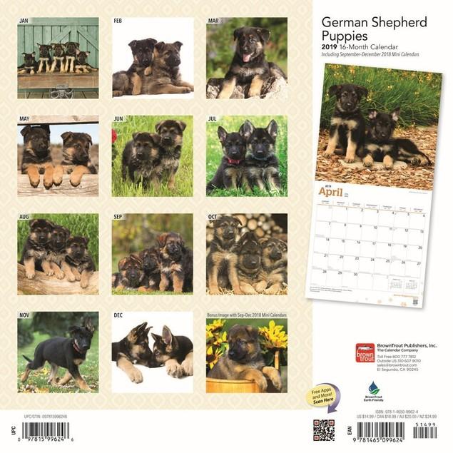 German Shepherd Puppies Wall Calendar, German Shepherd by Calendars