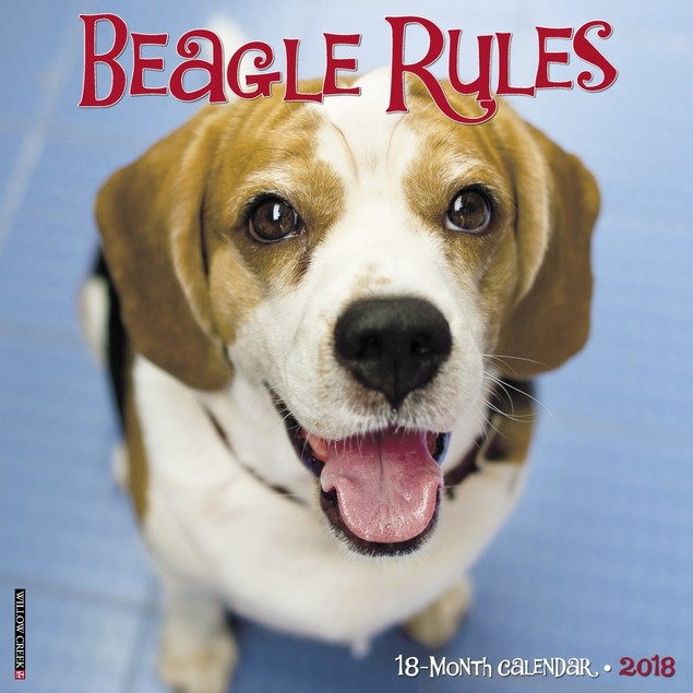 Beagle Rules Wall Calendar, Beagle by Calendars