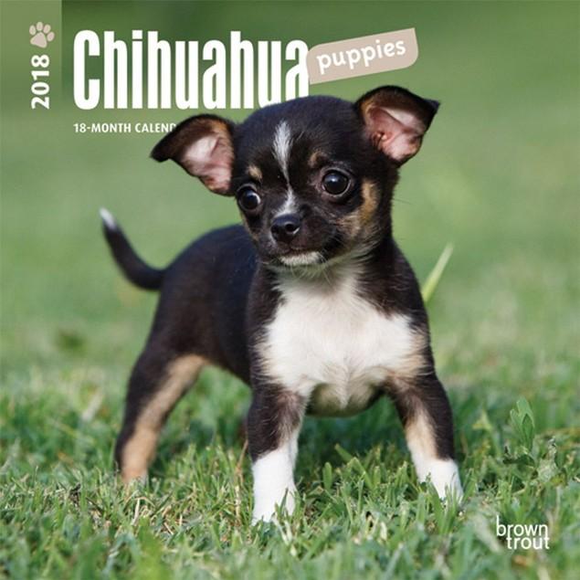 Chihuahua Puppies Mini Wall Calendar, Chihuahua by Calendars