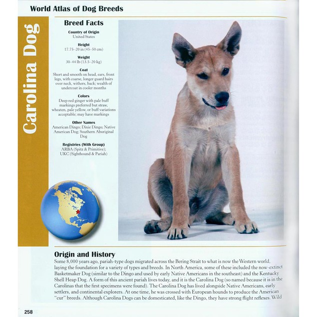 World Atlas of Dog Breeds Book, Assorted Dogs by TFH Publications