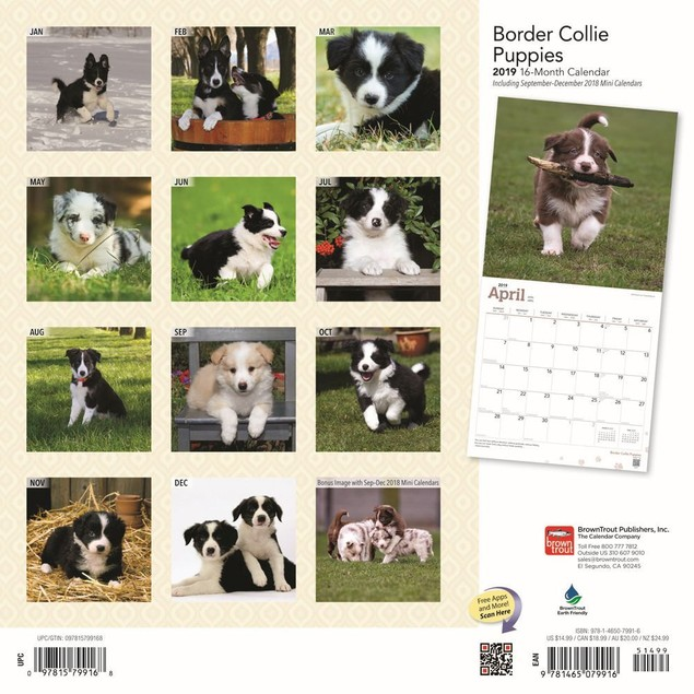 Border Collie Puppies  Wall Calendar, Border Collie by Calendars