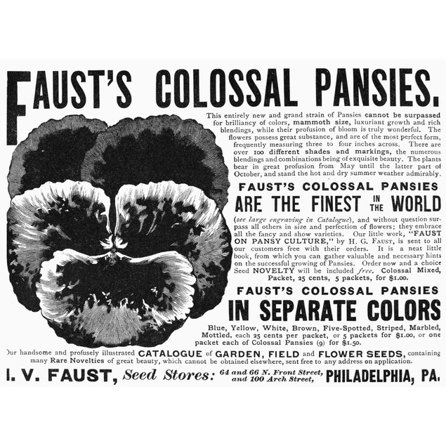 Pansy Advertisement, 1889. /Namerican Magazine Advertisement For Faust'S Pa