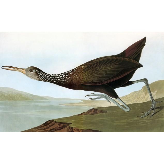 Audubon: Limpkin. /Nlimpkin (Aramus Guarauna), After John James Audubon For
