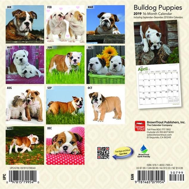 Bulldog Puppies Mini Wall Calendar, Bulldog by Calendars