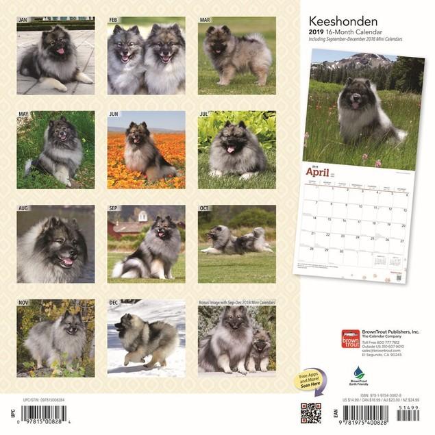 Keeshonden Wall Calendar, Keeshond by Calendars
