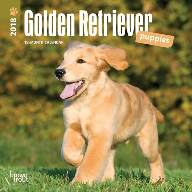 Golden Retriever Puppies Mini Calendar, Golden Retriever by Calendars
