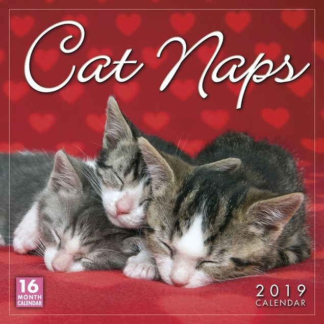Cat Naps Wall Calendar, Assorted Cats by Calendars