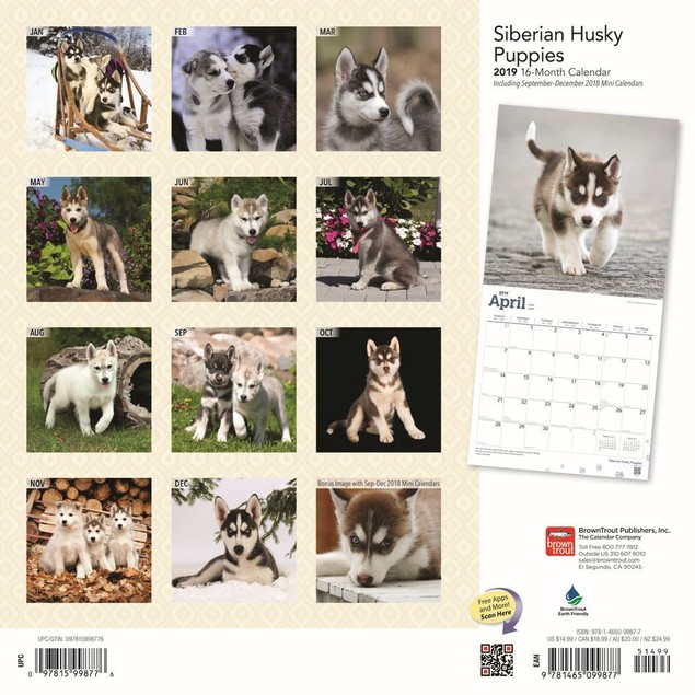 Siberian Husky Puppies Wall Calendar, Siberian Husky by Calendars