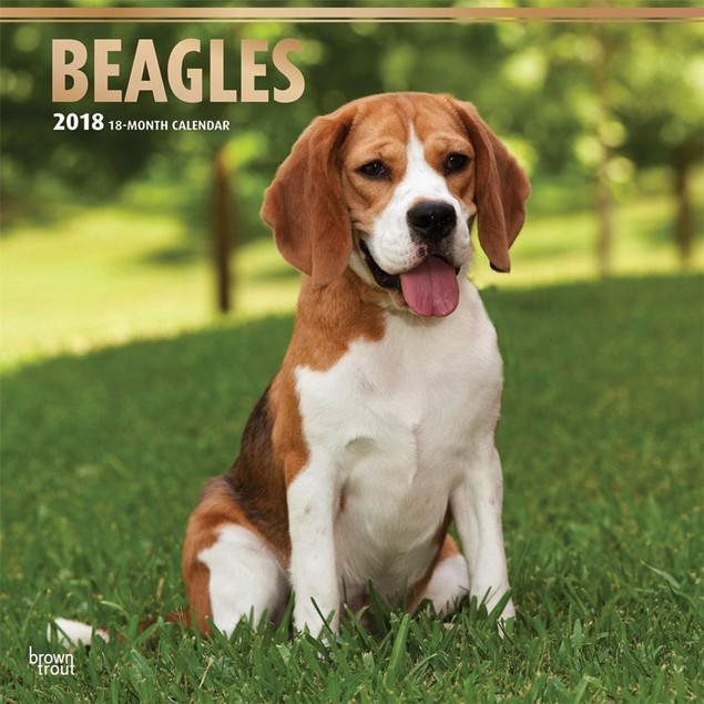 Beagles Wall Calendar, Beagle by Calendars