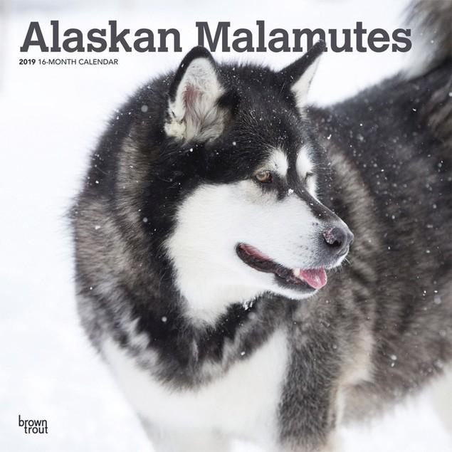 Alaskan Malamutes Wall Calendar, Alaskan Malamute by Calendars