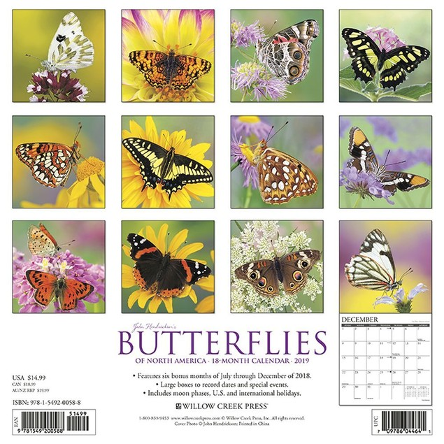 Butterflies Wall Calendar, Butterfly | Insects by Willow Creek Press