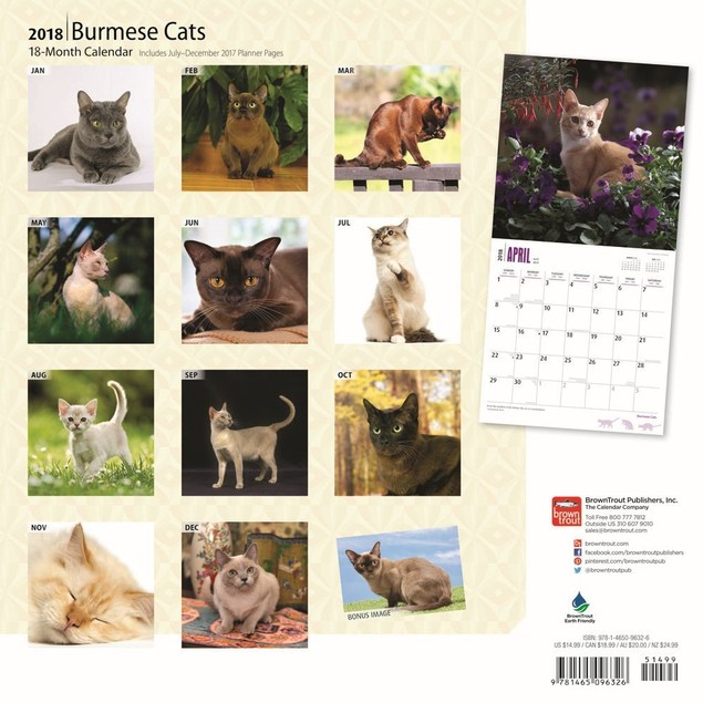 Cats Burmese Wall Calendar, Cat Breeds by Calendars