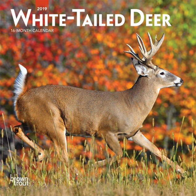 Deer White Tailed Mini Wall Calendar, Deer by BrownTrout