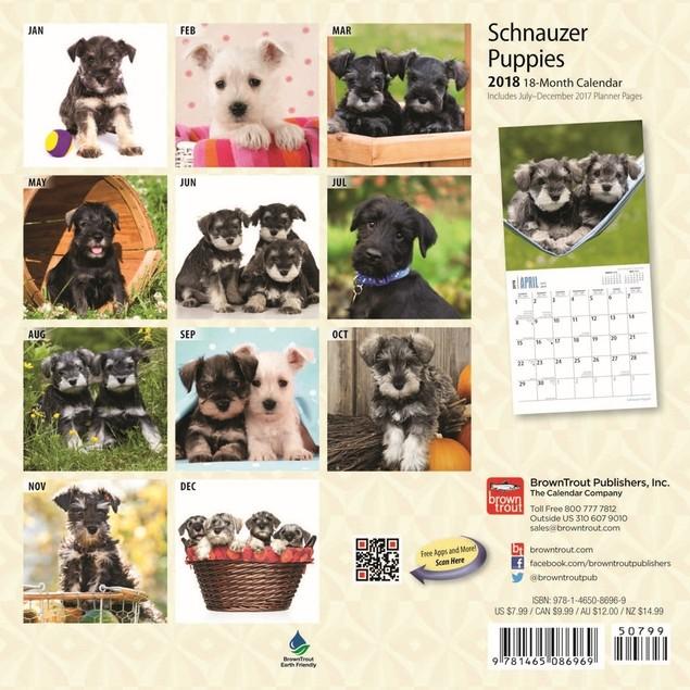 Schnauzer Puppies Mini Wall Calendar, Schnauzer by Calendars