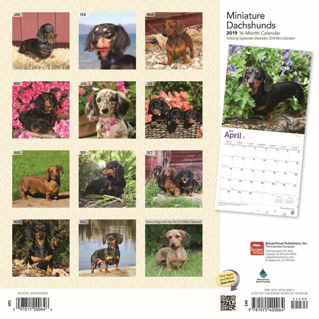 Miniature Dachshunds Wall Calendar, Dachshund by BrownTrout