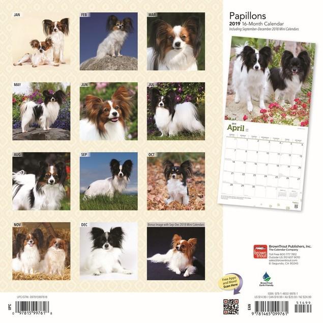 Papillons  Wall Calendar, Papillon by Calendars