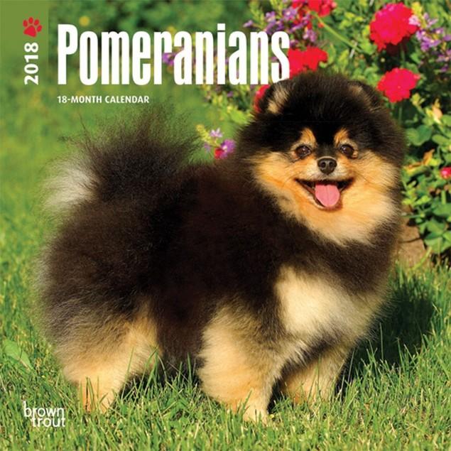 Pomeranian Mini Wall Calendar, Pomeranian by Calendars