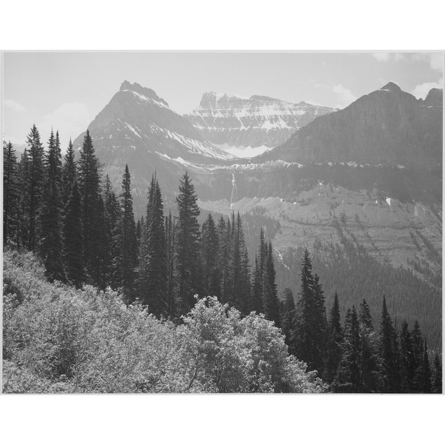 """Trees and bushes in foreground mountains in background """"In Glacier National"""