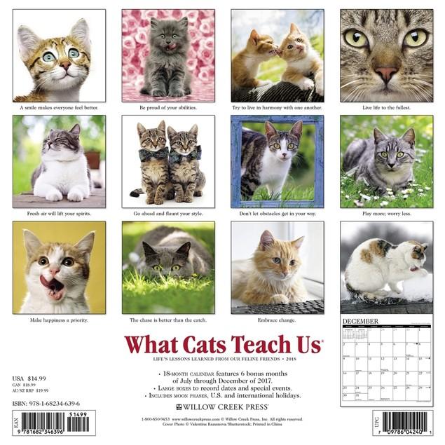 Just What Cats Teach Us Wall Calendar, Assorted Cats by Calendars