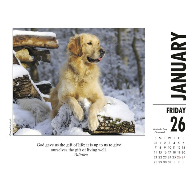 What Dogs Teach Desk Calendar, More Dogs by Calendars