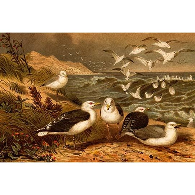 Seagulls.  High quality vintage art reproduction by Buyenlarge.  One of man