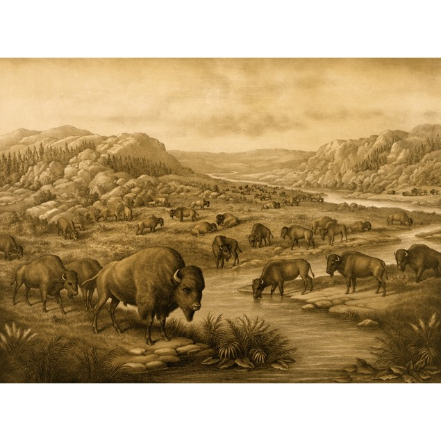 Buffaloes at Rest Poster