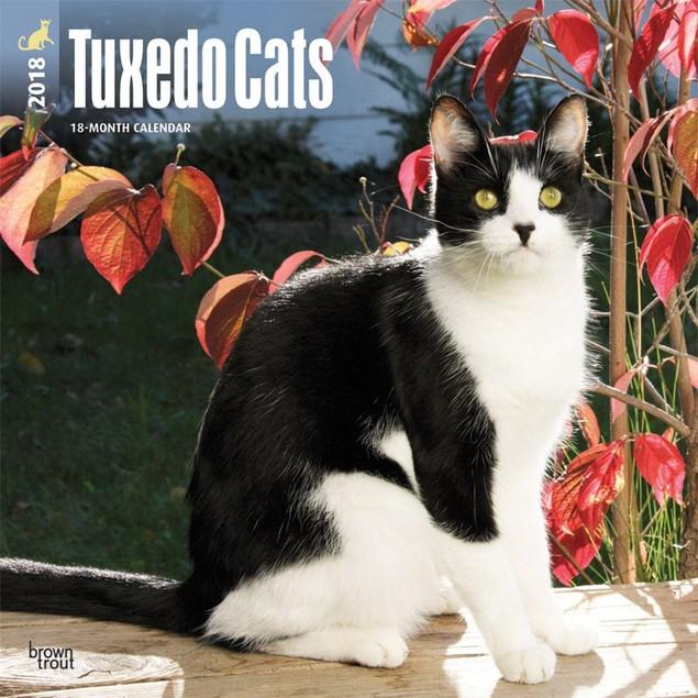 Cats Tuxedo Wall Calendar, Cat Breeds by Calendars