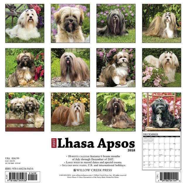 Lhasa Apsos Wall Calendar, Lhasa Apso by Calendars