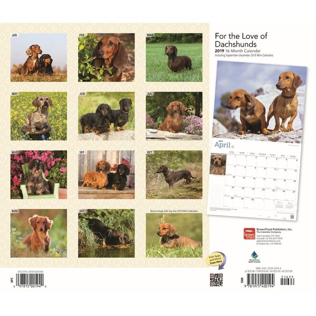 Dachshunds Deluxe Wall Calendar, Dachshund by Calendars