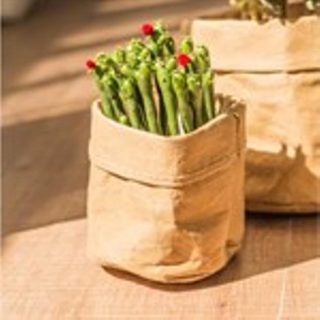 2-Pack Kraft Paper Planters