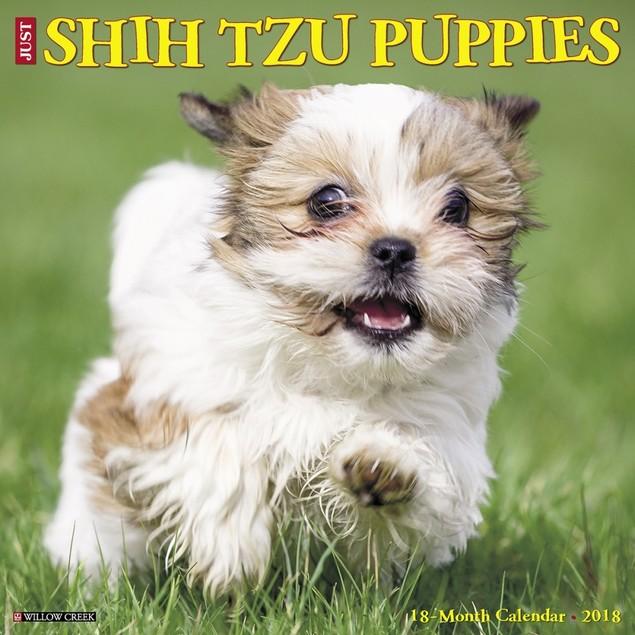 Just Shih Tzu Puppies Wall Calendar, Shih Tzu by Calendars