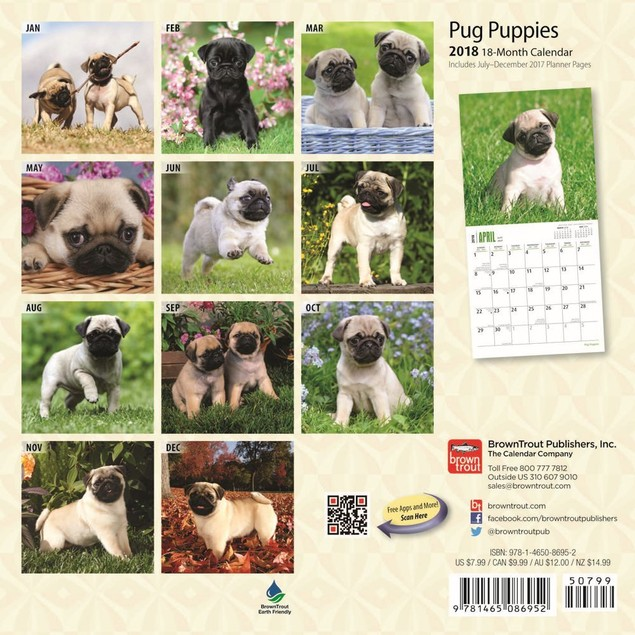 Pug Puppies Mini Calendar, Pug by Calendars