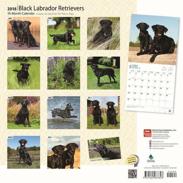 Lab Retriever Black Wall Calendar, Black Lab by Calendars