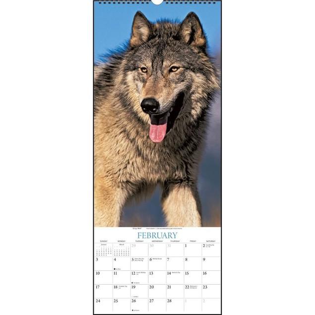 Wolves  Wall Calendar, Wolves by Calendars