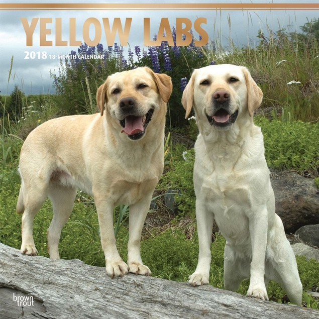 Lab Retriever Yellow Wall Calendar, Labrador Retriever by Calendars