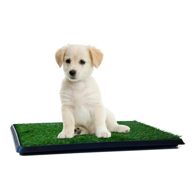 PETMAKER Puppy Potty Trainer